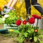 Gardening concept: beautiful flowers in garden with sun light — Stock Photo #47966309