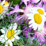 Beautiful wildflowers close up — Stock Photo #47966657