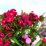 Beautiful wildflowers close up — Stock Photo #47968615