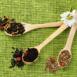 Assortment of dry tea in wooden spoons on green background — Stock Photo #47969011