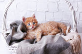 Cute little red kitten  relaxing in basket, on light background — Stock Photo