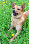 Funny cute dog, outdoors — Stock fotografie