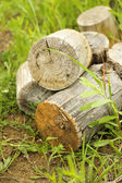 Firewood on green grass — Stock Photo