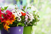 Bouquet of colorful flowers in decorative buckets, on chair, on bright background — Stock Photo