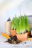 Green grass in flowerpots and gardening tools, on wooden table — Stock Photo