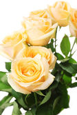 Bouquet of beautiful roses close up — Stock Photo