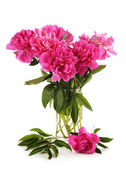 Beautiful pink peonies in glass vase, isolated on white — Stock Photo