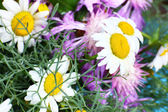Beautiful wildflowers close up — Stock Photo