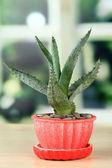 Aloe in flowerpot, on wooden windowsill — Stock Photo
