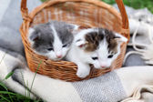 Cute little kittens in basket, outdoors — Stock fotografie
