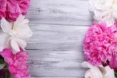 Krásné růžové a bílé pivoňky na barevné dřevěné pozadí — Stock fotografie