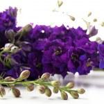 Beautiful purple flowers close up — Stockfoto