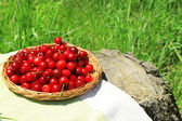 Sweet cherries on wicker stand with napkin on glade — Stock Photo