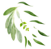 Green leaves isolated on white — Stock Photo