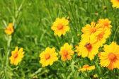 Vackra vilda blommor, utomhus — Stockfoto