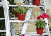 Wooden frame with flowers pots in garden — Stock Photo