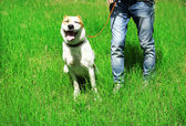 Funny big alabai dog and owner, outdoors — Stockfoto