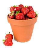 Ripe sweet strawberries in pot isolated on white — Stock Photo