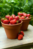 Ripe sweet strawberries in pots on table in garden — Stock Photo