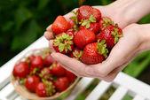Ripe sweet strawberries in female hands on bright background — Foto de Stock
