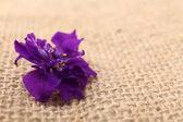 Beautiful wild flower on burlap background, close up — Stock Photo