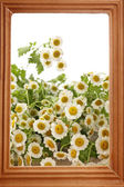 Beautiful wild flowers in wooden frame, close up — Stock Photo