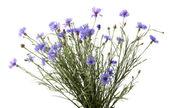 Beautiful wild flowers isolated on white — Stock Photo