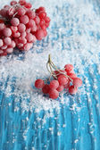 Red berries of viburnum with ice crystals, on blue background — 图库照片