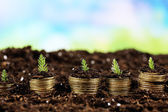 Business concept: golden coins in soil with young plants on nature background — Stock Photo