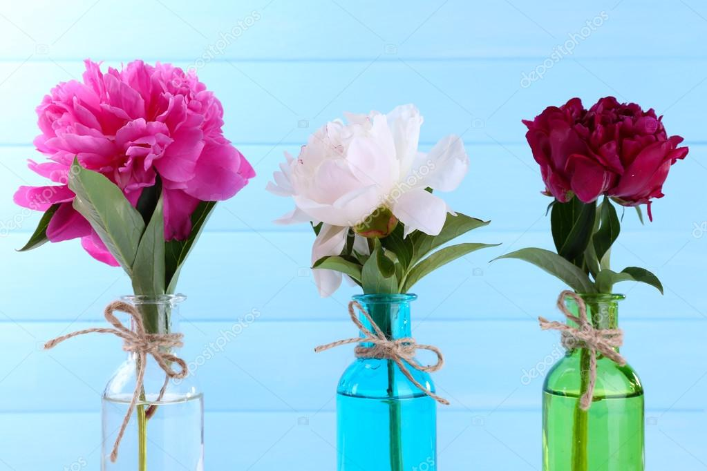 schöne pfingstrose blumen in glas-vasen, auf farbigem hintergrund, Best garten ideen