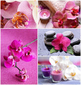 Collage di bellissime orchidee — Foto Stock