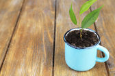 Young plant in mug on color wooden background — Stock Photo