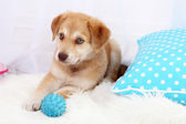 Cute beige puppy playing with ball on white carpet — Foto de Stock