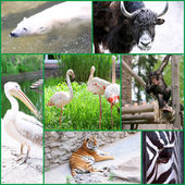 Zoo collage — Stock Photo