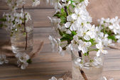Beautiful fruit blossom in glass — Stok fotoğraf