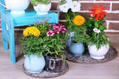 Flowers in  decorative pots on chair, on bricks background — Stock Photo
