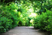 Footpath in park — Stock Photo