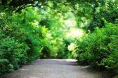 Patika park — Stok fotoğraf