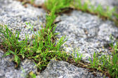 Green grass growing from stone walkway — Stock Photo