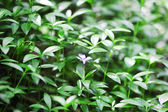 Spring plants in garden — Stock Photo