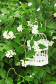 White vintage birdcage hanging on branch — ストック写真