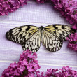 Beautiful butterfly and lilac flowers, on wooden background — Stock Photo #48398639
