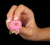Pink flower with woman's hand on black background — Stock Photo