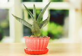 Aloe in flowerpot, on wooden windowsill — Stock Photo