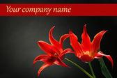 Beautiful red tulips on dark background — Stock Photo