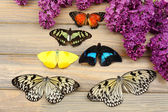 Beautiful butterflies and lilac flowers, on wooden background — Stock Photo