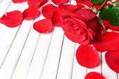 Beautiful petals of red roses on wooden background — Stock Photo