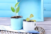 Young plant in mugs on color wooden background — Stock Photo