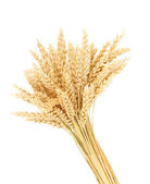 Sheaf of wheat isolated on white — Stock Photo