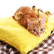Red cat with cute ducklings and little chicken on yellow pillow close up — Stock Photo #48449475
